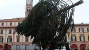L'arrivo dell'albero di Natale in Piazza Saffi (foto Frasca)