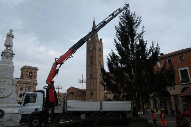 L'allestimento dell'albero di Natale in Piazza Saffi (foto Frasca)