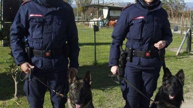 COLLEGHI A 4 ZAMPE Agenti con i cani antidroga. Qui, sono loro gli aiutanti (foto di repertorio)