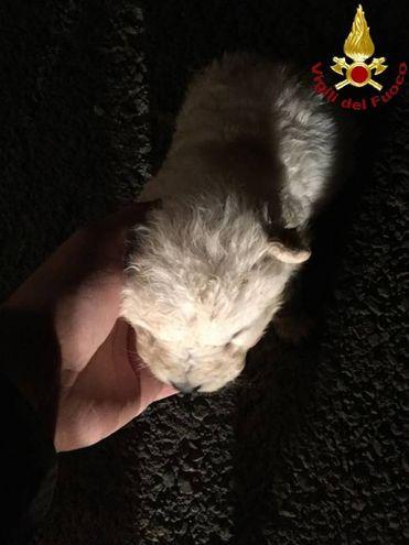 Il recupero del cucciolo sopravvissuto