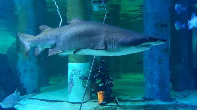 Il Presepe sommerso dell'Acquario di Cattolica  attrae la curiosità degli squali