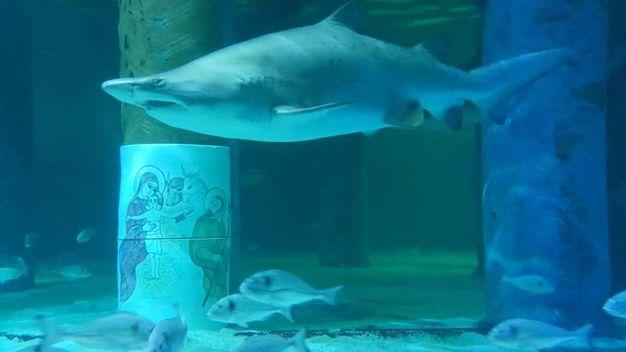 Gli squali, dopo un primo momento di incertezza, circondano gli uomini. Con lieto fine