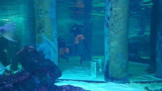 I presiepi sommersi sono ambientati nelle vasche e circondati da pesci, coralli, cavallucci marini e tante altre specie