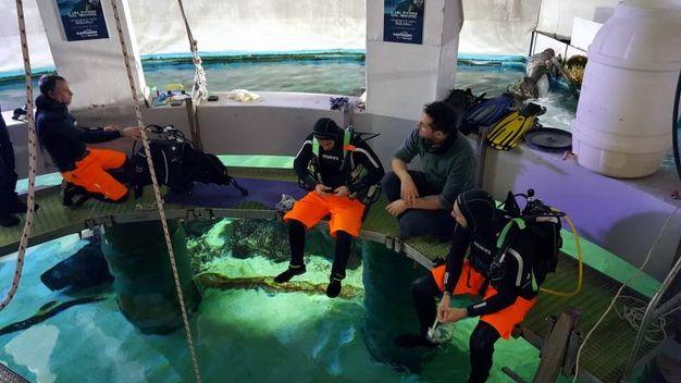 A fine lavoro, i tre sub riemergono, lasciando gli squali a custodire il presepe