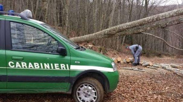 Sono intervenuti i carabinieri forestali