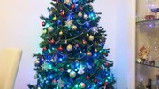 L'albero di casa Micheloni/Stilo