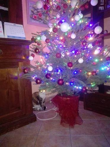 La foto dell'albero inviata da Michele Agozzino