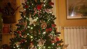 Questo è il nostro albero, Simona e Sara (Firenze)
