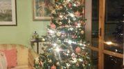 Albero di Natale e presepe dentro l'albero. Auguri a tutti da Claudia e famiglia