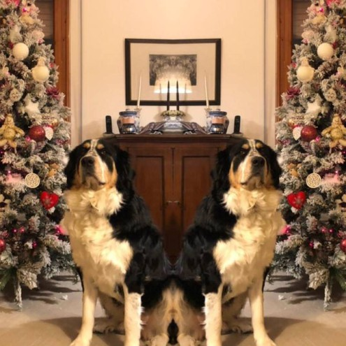 Il mio albero e il mio cane! (foto di Laura Tanini)