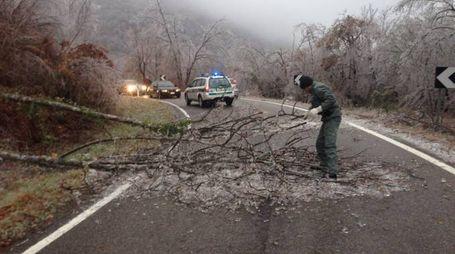 Risveglio ghiacciato e alberi caduti nell'Appennino reggiano (Foto Sciaboni)