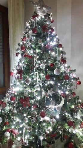 L'albero di Daniela Guidi di Pisa