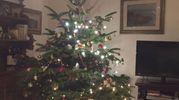 L'albero di Simona Moradei di Scandicci