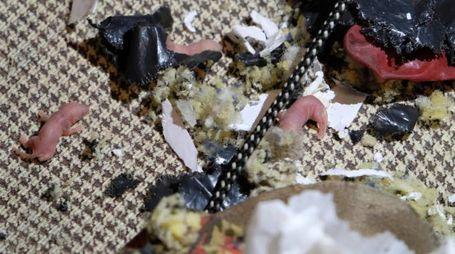 I topi rosicchiano il cibo (foto Fiocchi)