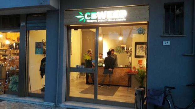 Ecco Cbweed, il primo cannabis store in provincia di Pesaro Urbino