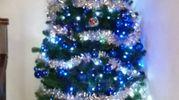 L'albero di Paola (Santo Stefano Magra)