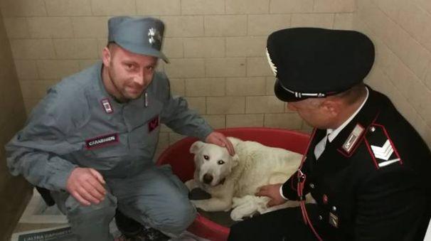 Uno dei cani salvati dai militari