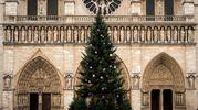 L'albero di Natale di fronte a Notre Dame a Parigi (Afp)