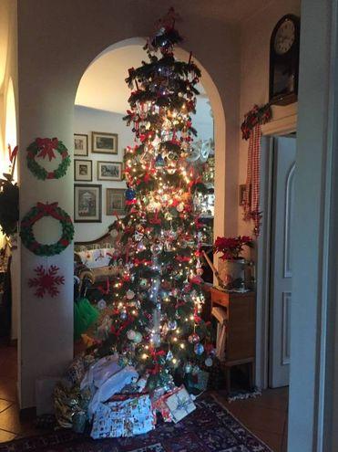 Gli alberi della famiglia Pacini