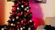 Albero di Natale di Roberta - Bologna