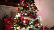 L'albero di Margherita Ruggeri