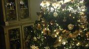 L'albero di Villa Maura