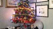 L'albero di Giorgio, il puntale e la prima palla con scritto Buon Natale comprate in S.Lucia nel 1957