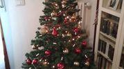 L'albero di Francesco e Giulia
