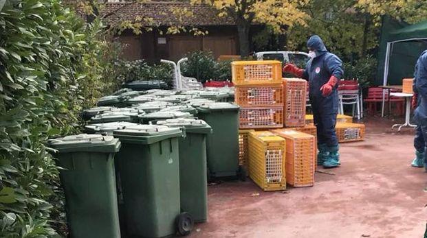 Operatori al lavoro nel parco contro i conigli