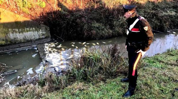 Un carabiniere vicino al torrente pieno di pesci morti