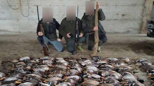 La foto delle anatre uccide che sta facendo scandalo
