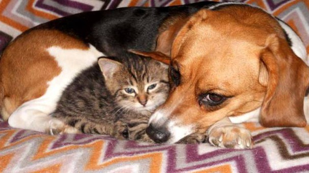 Freedom, la piccola Beagle salvata da Green Hill