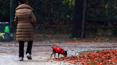 Nel mirino i proprietari dei cani