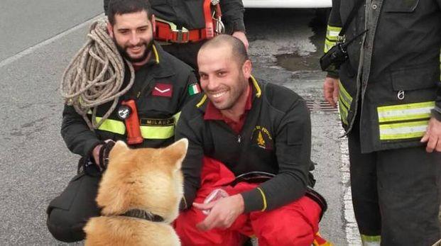 Il cucciolo di Akita e i pompieri che lo hanno tratto in salvo
