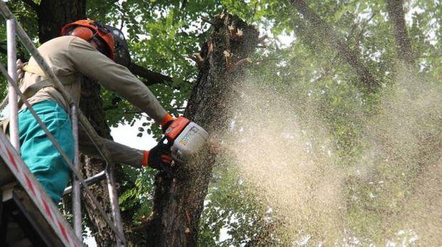 Un uomo mentre taglia un albero (foto repertorio)