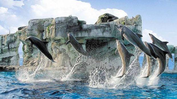 """Rimini, via libera al bagno con i delfini. """"Ma non diventerà mai un ..."""