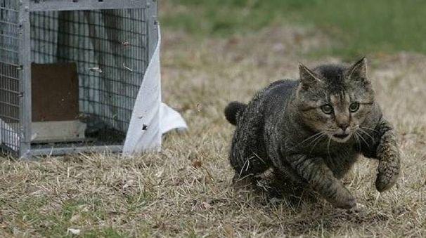 Poco distanti dalle colonie feline trovate gabbie che vengono utilizzate per catturare i gatti