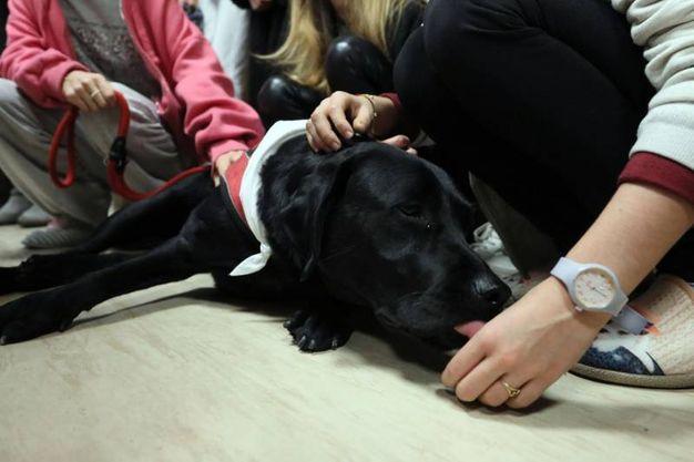 Anche il cane per le coccole ai piccoli pazienti (foto Schicchi)