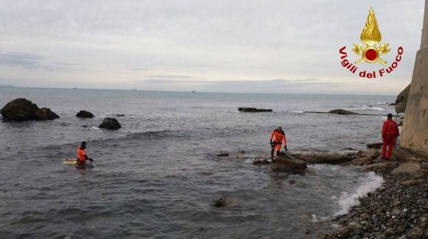 Il recupero del delfino (Foto vigili del fuoco)