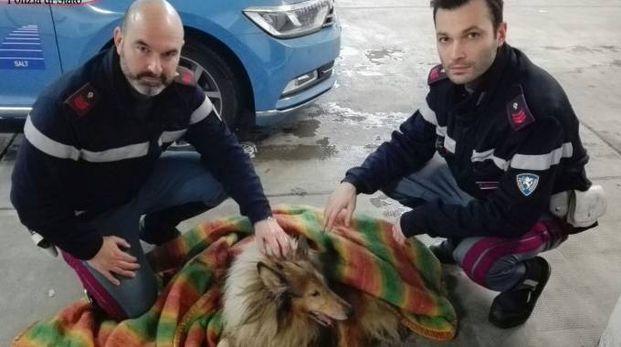 Cane salvato in autostrada dalla polizia stradale