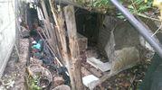 Il luogo in cui sono stati trovati i cuccioli