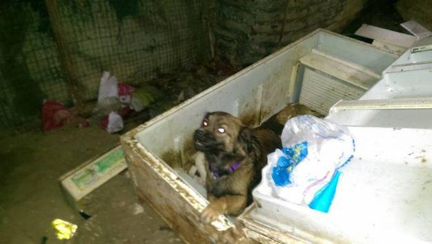 La cagnolina trovata con 11 cuccioli