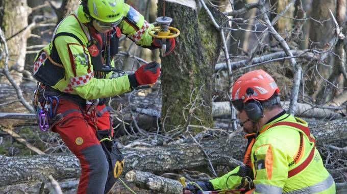 Tragico incidente nel bosco (Orlandi)
