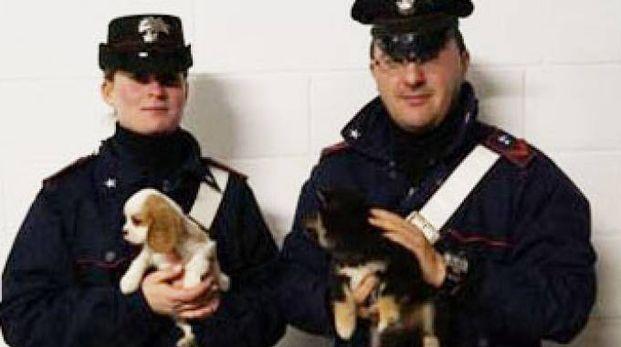 Alcuni dei cuccioli salvati
