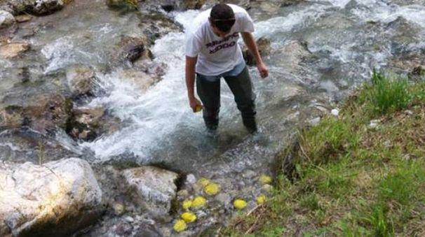 I sassi gialli nel fiume Caldone