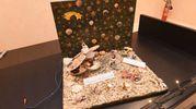 La premiazione dei presepi più votati con il Resto del Carlino: il presepe di conchiglie e uncinetto (foto Schicchi)