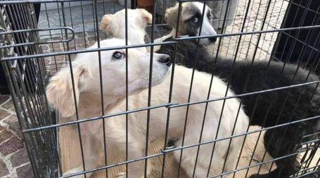 MISTERO I cuccioli ritrovati
