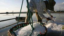 RACCOLTA SALE Al porto sequestro amministrativo da 15 tonnellate
