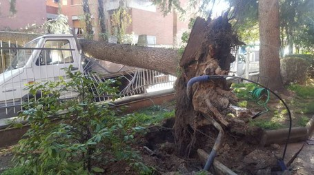 L'albero caduto su un furgone a San Lazzaro