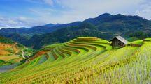 Campi di riso in Vietnam – Foto: naihei/iStock